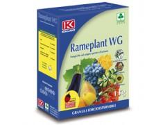 wholesale pesticides RAMEPLANT WG FUNGICIDA OSSICLORURO DI RAME