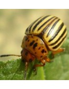 wholesale pesticides INSETTICIDI